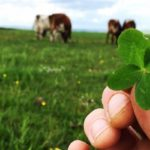 Soil Association Stock Photo of a hand holding a four leaf clover