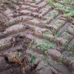 Tractor tread marks made in soft ground