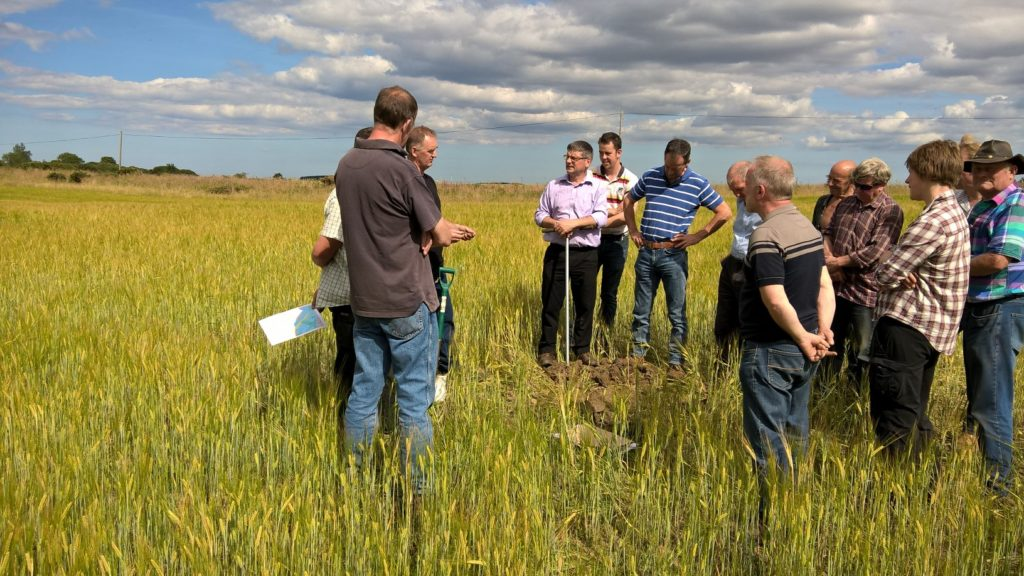 A group of people in a crop field with dramatic blue sky with dark clouds above.
