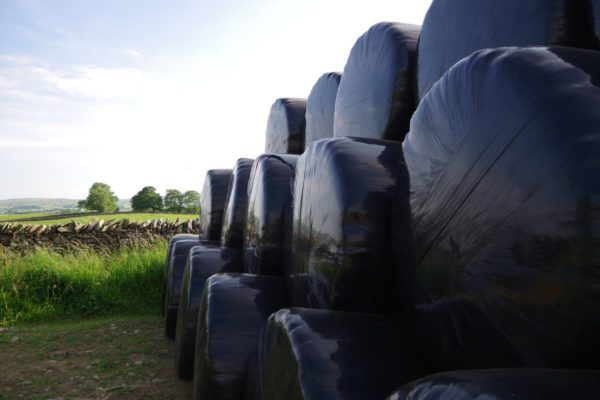 Silage bales stacked