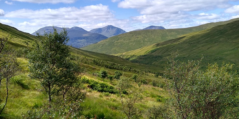 An upland valley with mountains in the background and birch trees in the foreground and areas of both grassland and heather in between.