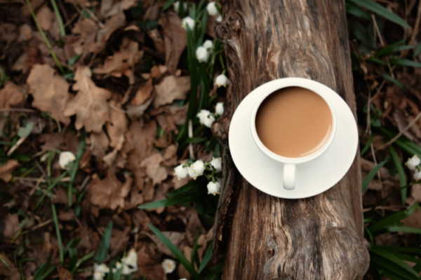 A white tea cup, full of tea on a saucer balancing on a log within a forest. There are autumn leaves on the ground and snow drops nearby.