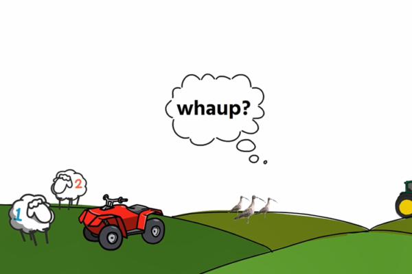 A cartoon type image showing rolling hillocks, a red quad bike on one with two sheep, three curlews on the middle hillock and a wheel of a tractor disappearing off the screen in the other.
