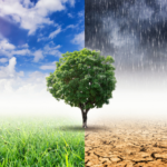 The photo shows a tree in full leave in the middle of the image. Either side of the tree are the extremes of weather conditions in a changing climate - on the left there is a bright sunny sky and lush green grassland; on the right side there is a dark and heavy sky with cracked and arid ground that is beyond the point where anything can grow.